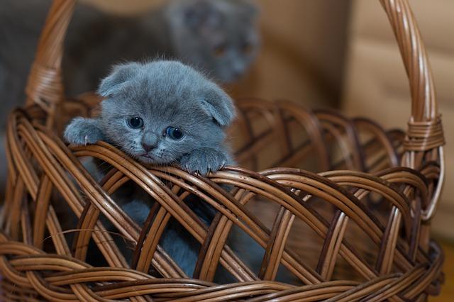 kotě v košíku